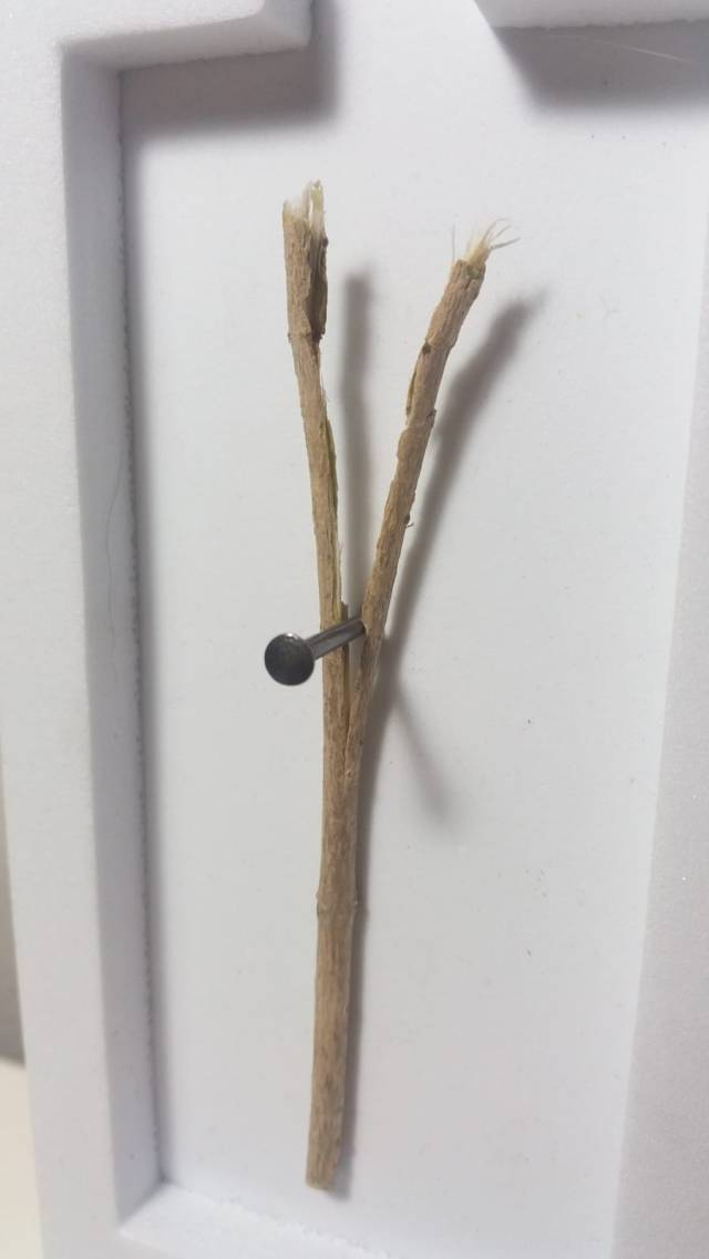 roccioletti - esemplare 4