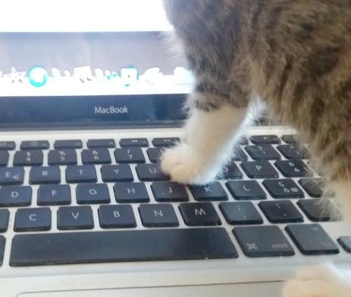 roccioletti - kittens on keyboard 8