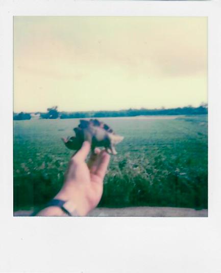 roccioletti - la memoria non è la storia 01
