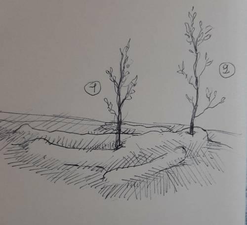 roccioletti - bozze 5